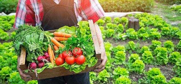 Çok çiftli mağazada faydalı sebzeler